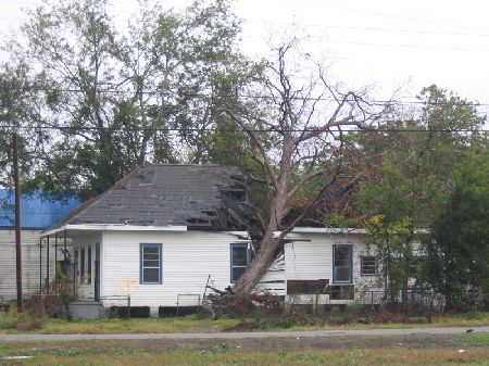 tree-house-nola.jpg
