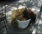 Jamba Planter.jpg