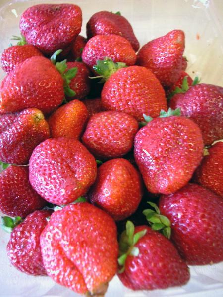 strawberries_7-10-04.jpg